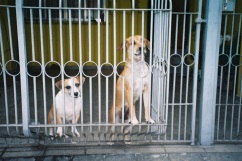 adelaide ivanova_dogs (3)