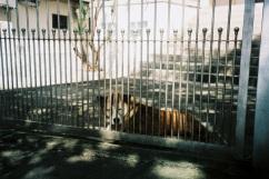 adelaide ivanova_dogs (4)