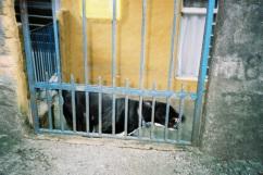 adelaide ivanova_dogs (6)