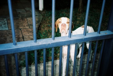 adelaide ivanova_dogs (8)