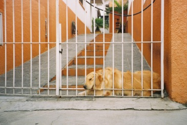 adelaide ivanova_dogs (9)